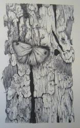 le papillon sur le tronc 1960-crayon 40x30cm